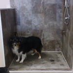 Chyna the Aussie Shepard is checking out the doggie shower.